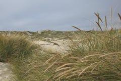 Dunas e hierba de arena foto de archivo