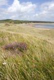 Dunas e hierba de arena Fotografía de archivo libre de regalías