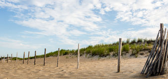Dunas gramíneas do verão Imagens de Stock