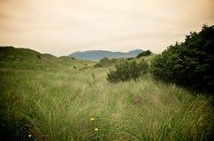 Dunas herbosas en la bahía de Nehalem Foto de archivo libre de regalías