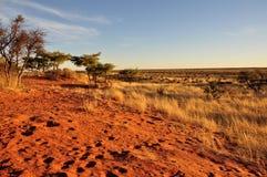 Dunas rojas en la puesta del sol, Kalahari Fotos de archivo