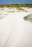 Dunas y avena del mar Imagen de archivo libre de regalías