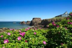 Dunbar hamn och slott Royaltyfria Bilder