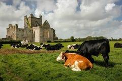 Dunbrody Abbey. county Wexford. Ireland. stock photo