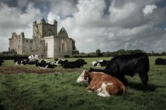 Dunbrody Abbey. county Wexford. Ireland. Royalty Free Stock Photos