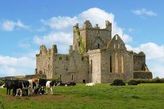 dunbrody abbey ståndsmässiga Wexford ireland Fotografering för Bildbyråer