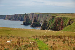 Duncansby Stacks, Scotland. The Duncansby Stacks in Scotland. This picture was taken from Duncansby Head royalty free stock image