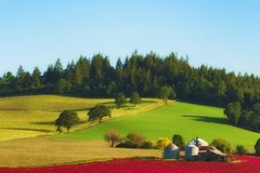 Dundee Hills farm in morning light. Dundee, Oregon, USA - May 6, 2016: Morning light cast shadows along the hillside of this farmland of red clover,grapes,grain Royalty Free Stock Images