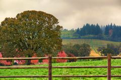 Dundee Hills Vineyards in Oregon Royalty Free Stock Photography