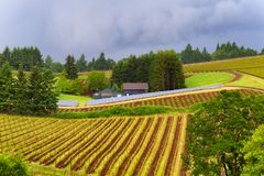 Dundee Hills Vineyards in Oregon. Dundee, Oregon,USA - May 18,2015: Vineyards covers the Dundee rolling hills where solar panels are also placed to harvest solar stock photo