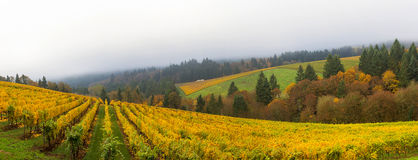 Dundee Oregon Vineyard During Fall Season Panorama. Dundee Oregon Winery Vineyard in fall season during one foggy morning panorama royalty free stock images