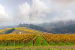 Dundee Oregon Vineyard During Fall Season. Dundee Oregon Winery Vineyard in fall season during one foggy morning stock photos