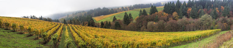 Dundee Oregon Vineyards Panorama. Dundee Oregon Vineyards on Rolling Hills with Morning Fog in Fall Season Panorama stock photos
