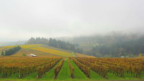 Dundee Oregon Vineyards on Rolling Hills with Morning Fog and Misty Clouds in Fall Season Time Lapse stock video footage