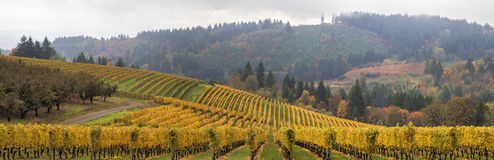 Dundee Oregon Vineyards Scenic Panorama. Dundee Oregon Vineyards on Rolling Hills with Morning Fog in Fall Season Scenic View Panorama royalty free stock photography