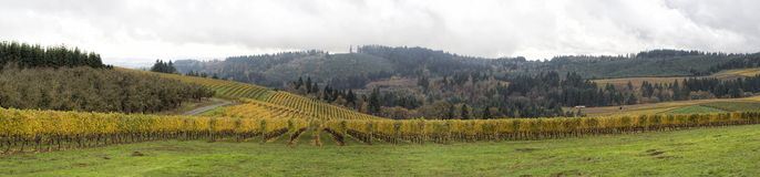 Dundee Oregon Vineyards Sweeping View Panorama. Dundee Oregon Vineyards on Rolling Hills with Morning Fog in Fall Season Sweeping View Panorama royalty free stock image