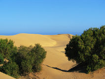 Dune. Sand desert mountain canaria spain africa morocco sahara nature reserve dry sahel oasis shrub bush Royalty Free Stock Images