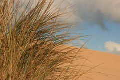 Dune. Picture of a dune with vegetation royalty free stock images
