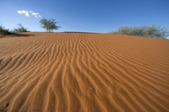Dune. Desert sand dune in namibia africa Stock Photo