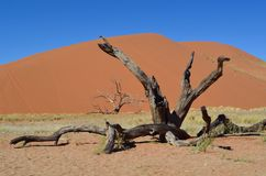 Dune 45 Royalty Free Stock Photo