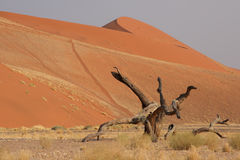 Dune 45. Near Sossusvlei, Namibia; The dune received its name due to the fact that it is located 45 kms from the entrance to the national park stock photo