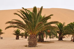 Dune 7,Namibia Royalty Free Stock Photos