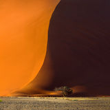 Dune 40 and acacia tree at the foot of it in Sossusvlei Stock Image