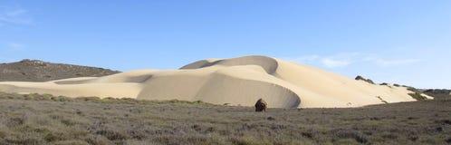 Dune alla costa di Ningaloo, parco nazionale della gamma del capo, occidentale Fotografia Stock Libera da Diritti