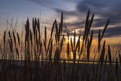 Dune alte con l'erba della duna e un'ampia spiaggia qui sotto Fotografia Stock Libera da Diritti