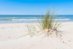 Dune avec l'herbe dunaire ou l'Ammophila et l'océan calme Images stock