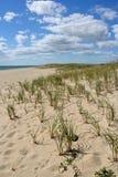 Dune avec le roseau des sables Photographie stock libre de droits
