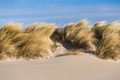 Dune on the Baltic Sea Royalty Free Stock Image