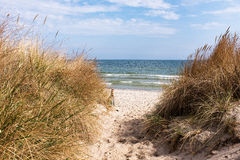 Dune at the Baltic Sea, Ruegen, Germany. Dune at the Baltic Sea, Ruegen Royalty Free Stock Images