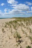 Dune with Beach Grass. Ocean dune covered in bunches of beach grass on a partly cloudy day royalty free stock photography