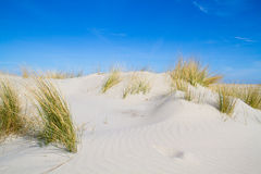 Dune with Beach grass Royalty Free Stock Photography