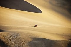 Dune Buggy and Dunes Royalty Free Stock Photography