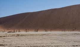 Dune Climbing. Tourists climbing a dune in the Namibian desert at Dead Vlei stock image