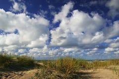Dune con erba verde Immagine Stock