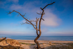 dune with crooked tree Stock Images
