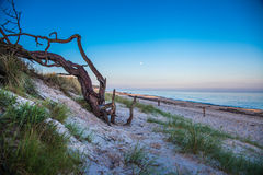 dune with crooked tree Royalty Free Stock Photo