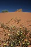 Dune de Kalahari Images stock