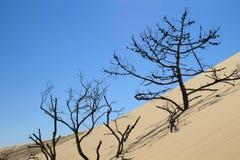 Dune de Pylat, France Photo stock