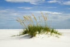 Dune de sable, île de Santa Rosa Images libres de droits