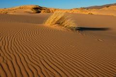 Dune de sable avec l'herbe - Afrique du Sud Images stock
