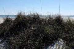 Dune de sable avec l'herbe dunaire photo libre de droits