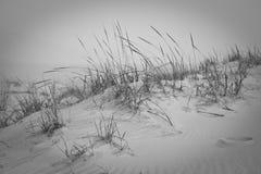 Dune de sable avec l'herbe grande Image libre de droits