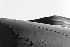 Dune de sable dans le désert en noir et blanc Photo libre de droits