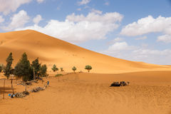 Dune de sable Sahara Photographie stock libre de droits