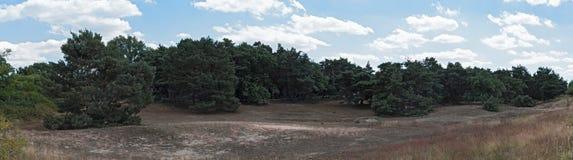 Dune de Schwanheimer de secteur de conservation de la nature de panorama à Francfort sur Main, Hesse, Allemagne Photos stock