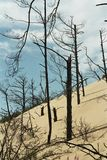 Dune with dead trees. The dunes of the Slowinski national park in Poland with dead trees Stock Photo